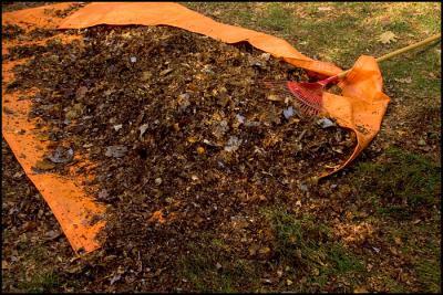 5 tips til brug af nedfaldsblade