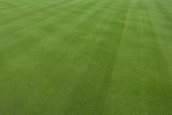 Sådan får du en jævn græsplæne